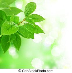 folhas, fresco, verde, bonito