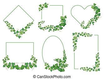 folhas, fundo, formas, fronteiras, sempre-viva, frames., plantas, branca, hera, diferente, verde, isolado