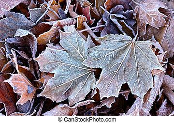 folhas, geada, caído