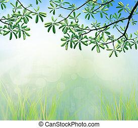 folhas, manhã, luz, árvore, verde, ramo