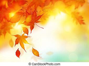folhas, outono, queda