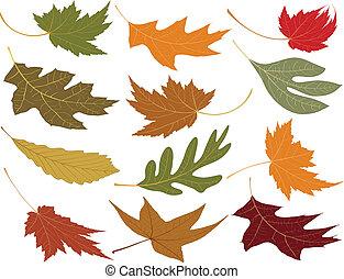 folhas, soprado, queda vento