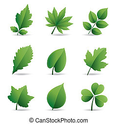 folhas, verde, elemento