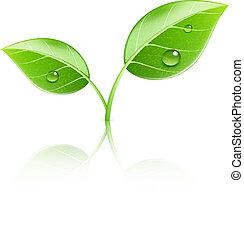 folhas, verde, lustroso
