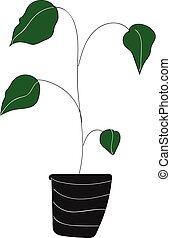 folhas, vetorial, fundo, houseplant, grande, branca, verde, cor, ilustração