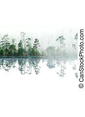 forest., cima, isolado, superfície, manhã, lake., taiga, nevoeiro, water., tranqüilo, baixo