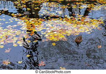 frança, luxemburgo, paris., outono, jardins