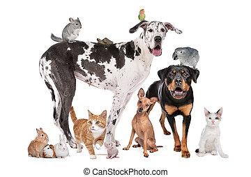 frente, fundo, animais estimação, branca