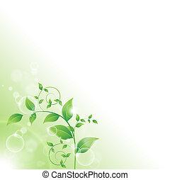 fresco, folhas, verde, ramo