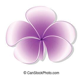 fresco, planta florescendo, five-petal