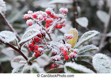 frost., norte, italy., rime, sob, piedmont, bagas