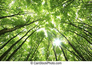 fundo, árvores verdes