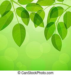 fundo, foliage