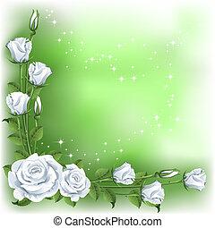 fundo, rosas