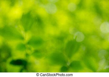fundo, verde