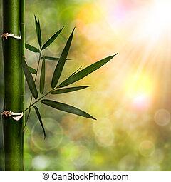 fundos, abstratos, natural, bambu, foliage