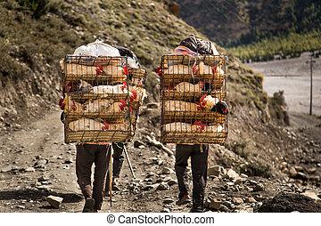 galinha, zeladores, transportar, gaiolas