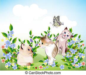 gatinhos, jogo, pequeno, borboleta, feliz, prado