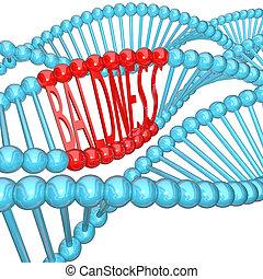 genética, -, hereditário, costa, adn, calvície
