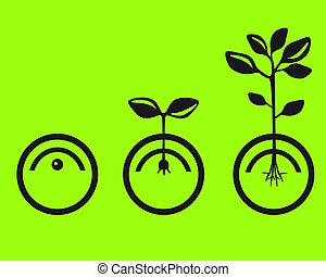 germine, sementes