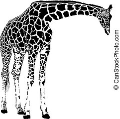 girafa, vetorial