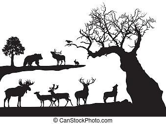 gnarled, árvore, fauna, isolado