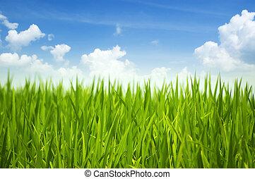 grama verde, céu