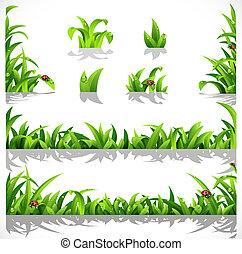 grama verde, luxuriante, orvalho