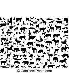 grande, diferente, animais, cobrança