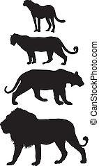grande, predadores, gatos, carnívoro