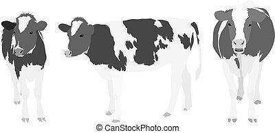 greyscale, vacas, três