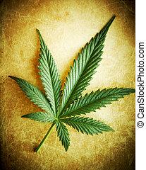 grunge, dof., raso, cannabis, fundo, folha
