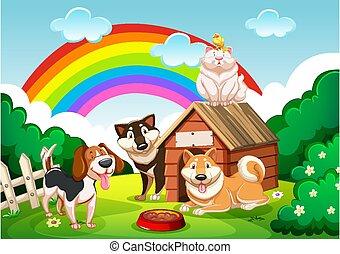 grupo, arco íris, cena, cão, jardim, gato
