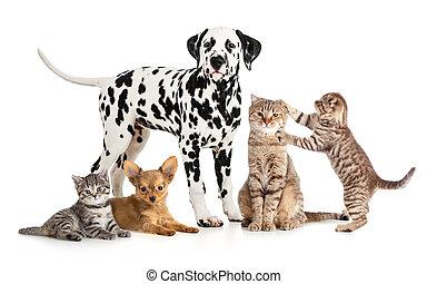 grupo, colagem, veterinário, isolado, petshop, animais estimação, animais, ou