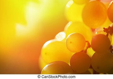 grupo, uvas