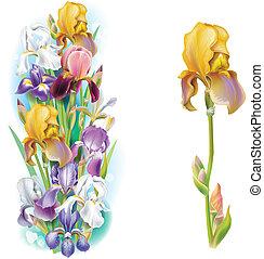 guirlandas, íris, flores