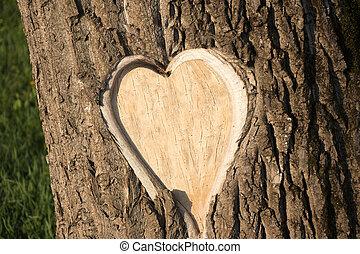 hearth, casca de árvore, dado forma
