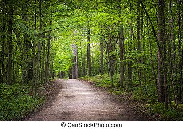 hiking, floresta, verde, rastro