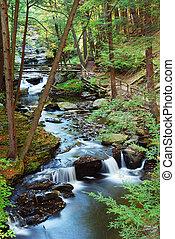 hiking, riacho, floresta, rastros