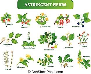 homeopatia, vetorial, collection., plantas, botanica, natural, ervas, set., ilustração, selvagem, astringent