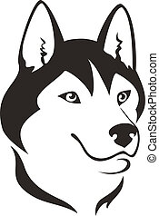 husky, cão