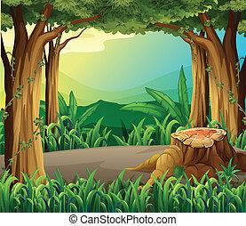 ilegal, acto derrubar árvores, floresta