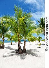 ilha, coqueiros, paraisos