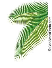 illustration., folhas, árvore, experiência., vetorial, palma, branca