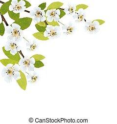 illustration., primavera, florescer, árvore, flowers., vetorial, brunch