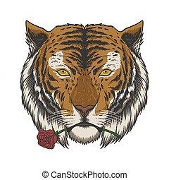 ilustração, rosa, tiger, vetorial, morder