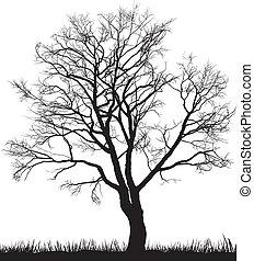 inverno árvore, noz