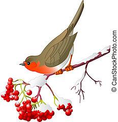 inverno, pássaro