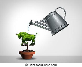 investir, mercado touro