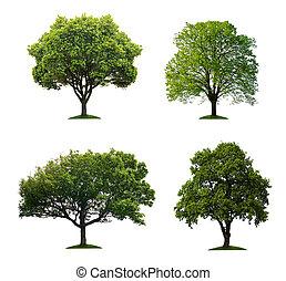isolado, árvores